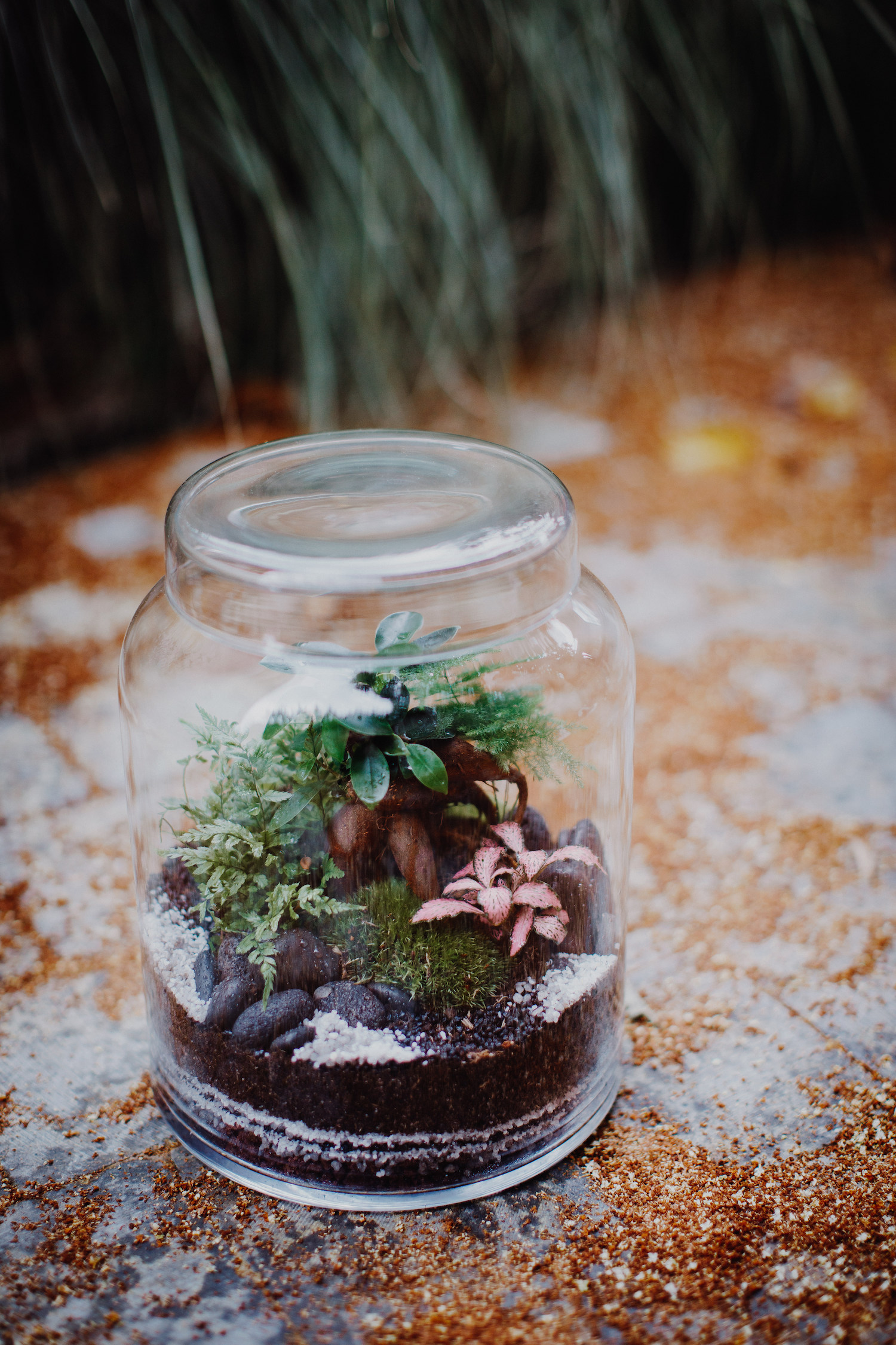 Terrarium - modèle Lake - medium